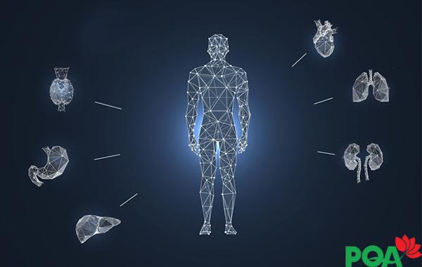 Các cơ quan trong cơ thể