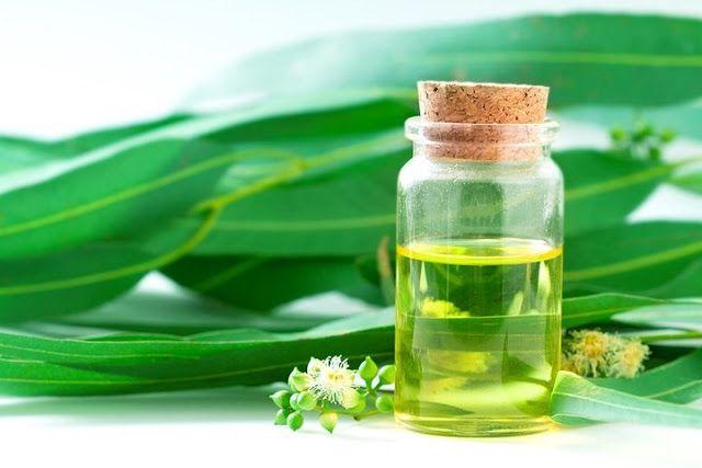 Tinh dầu: Liệu pháp mới trong điều trị bệnh hen suyễn