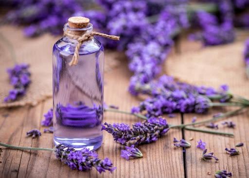 tinh dầu hoa oải hương trị hen suyễn