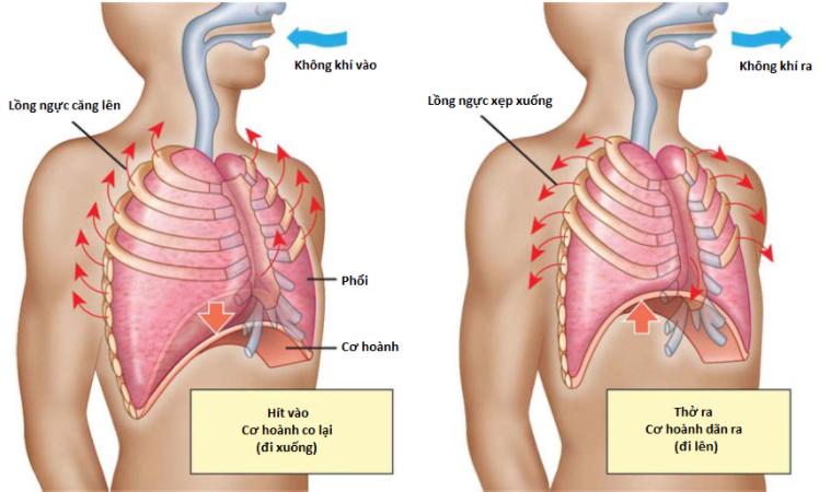 tập thở cho bệnh nhân copd