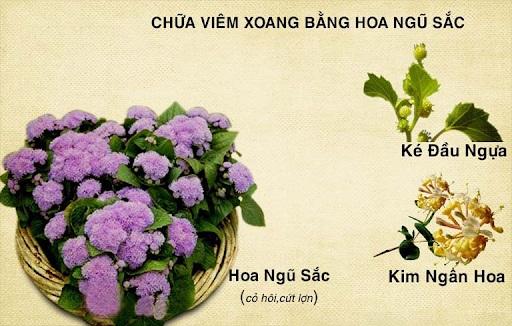 Khỏi ngay viêm xoang bằng mẹo chữa bệnh từ cây hoa ngũ sắc