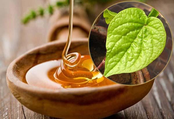 Chữa viêm phế quản bằng mật ong và lá trầu không