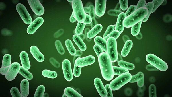 Virus là nguyên nhân chính gây ra viêm phế quản